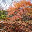 2017 神戸市立森林植物園の紅葉