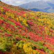銀泉台・赤岳の見事な紅葉