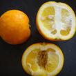 橙ママレード