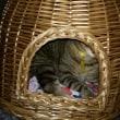 僕の『猫ちぐら』