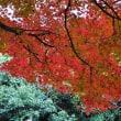 両足寺の紅葉