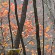 信州八千穂高原の紅葉