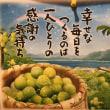 西郷どんで有名な雄川の滝♫  桜島の灰は♫