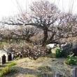 大阪城と梅林(その2)