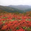 ホツツジの紅葉