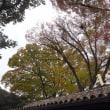 代官山の秋 2017