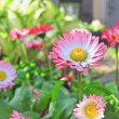 5月の庭に咲く・・・