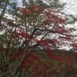 紅葉の千歳川