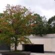 箱根は紅葉の走り