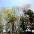 春 ~見沼にて5