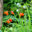 秋を迎えている癒やしの庭~花輪ばやし始まる!