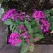 5枚の花の写真