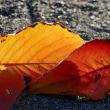 落葉の輝き