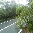 垂れてる枝や竹、落ちて濡れとる葉っぱに要注意!