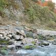 文化財保護法制定の記念日に考える保津川の遺産