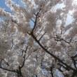 お花見会(4月13日)
