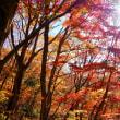 奥久慈の紅葉。