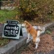 河内貯水池遊歩道にて_171204