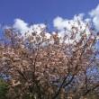 春季大法要について