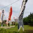 東京都東村山市近郊2018年の初夏・・空堀川のコイノボリ