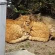 猫の多い街