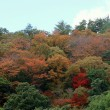 宮野湖周辺の紅葉