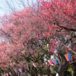 大宮公園梅まつり2018