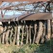 シイタケの成る木