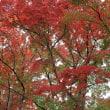 11月20日 盛秋紅葉