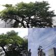 10月4日(木)今日の北川桜
