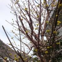 ようやく春に🌸