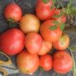 トマトの収穫は早めに!
