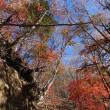 20日の散歩ではなく、甲府旅行から紅葉と富士山の写真など