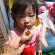 トマト収穫!プール遊び!