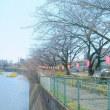 町内の桜まつり🌸 提灯準備中(^^)v