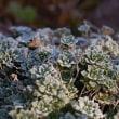 初氷と霜の朝