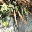 久能山の植物