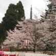 吉野の桜と醍醐の桜