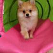 幼稚園体験にきてくれた【マシュくん】(*^-^*)  犬のしつけ教室@アロハドギー