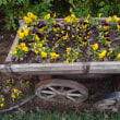 ハボタンの花壇2