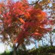 公園の紅葉を・・・