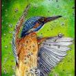 色鉛筆画407 (カワセミ)