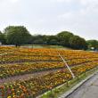 花博記念公園へ行ってきました。