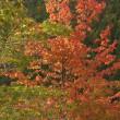見頃に・・・落合峠周辺の紅葉