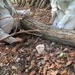 椎茸の菌うち