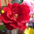 カットした赤い薔薇
