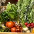 日替わりマルシェ「今週のカラフル野菜」♪