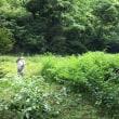 三和の宝 カワニナ養殖場 きれいにしたよ!