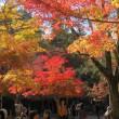 安芸(秋)の宮島