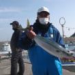 午前便、午後便ヒラメ釣りです。